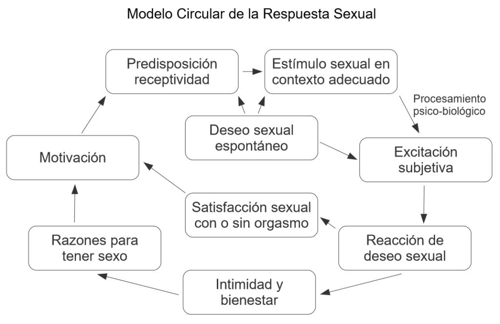 Modelo circular de la respuesta sexual
